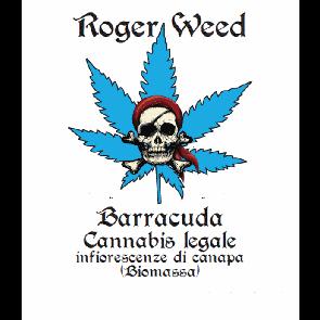 Roger Weed Barracuda - Violet CBD Alto 1g