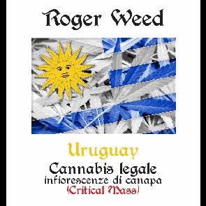 Roger Weed Uruguay – Critical Mass CBD Alto 1g